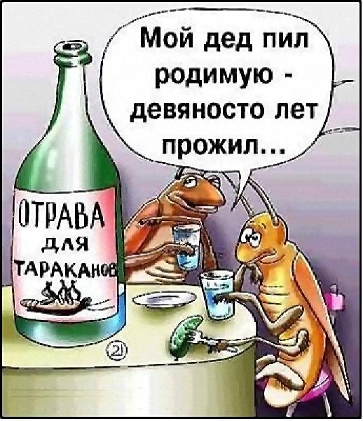 Как сделать отраву для тараканов